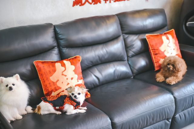 Dogs on Sofa