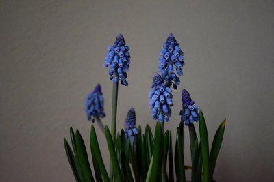 Blue Bell Shaped Flowers
