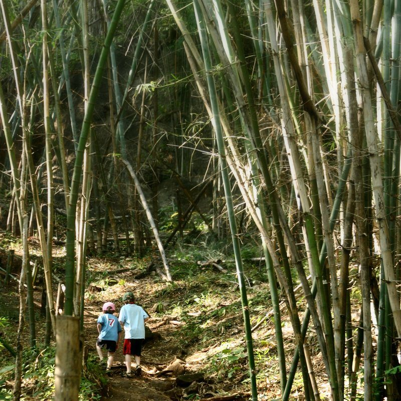 Boys In Bamboo Forest