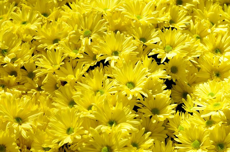 Bright Yellow Flowers In Bunches