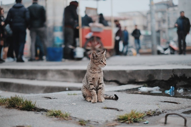 Brown Tabby Cat Sitting on Concrete
