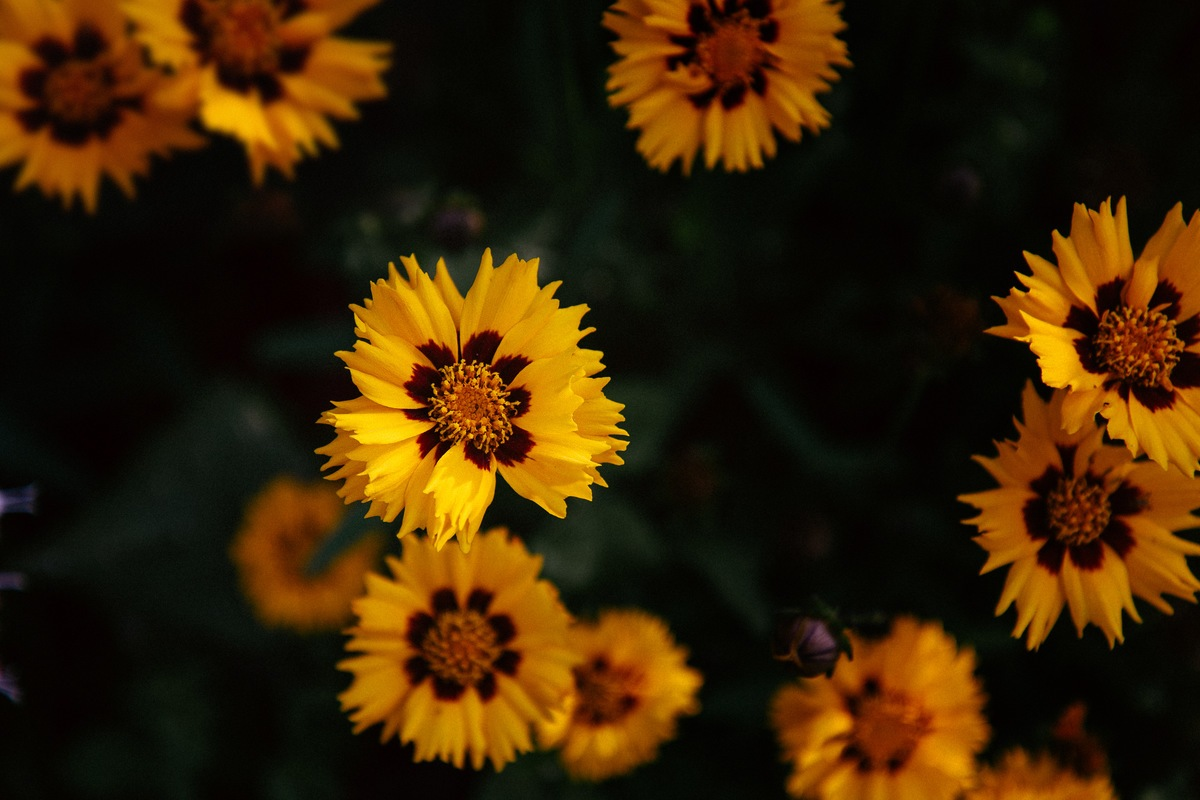 Close-Up  Yellow Petaled Flower Plant