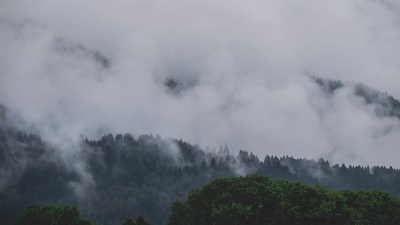 Clouds Covering Trees