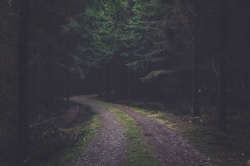 Desolate Forest Road
