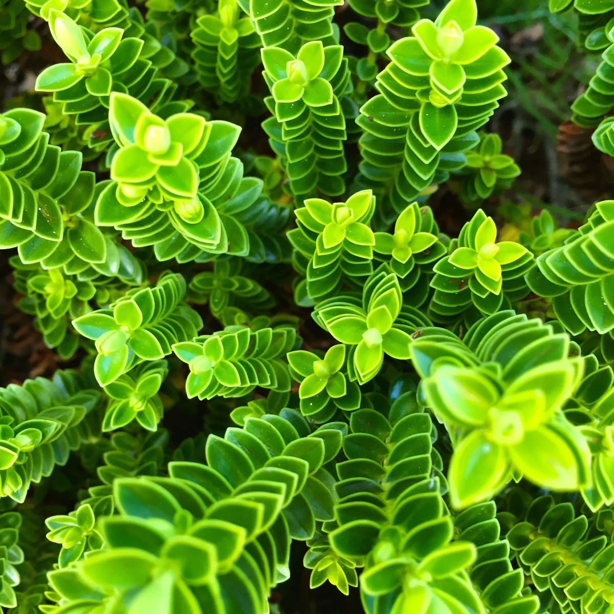 Focus Photography of Green Plant