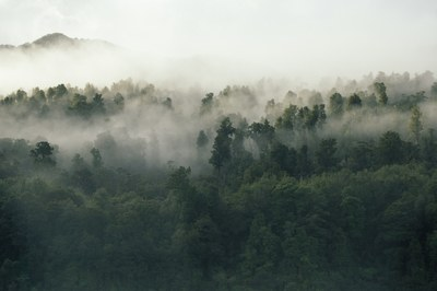 Green Leafed Trees Covered By Fog