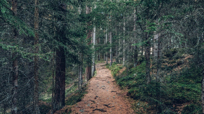 Landscape Photography of Forest Trail