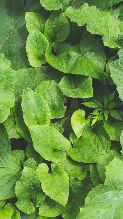 Layered Plant Leaves iPhone Wallpaper