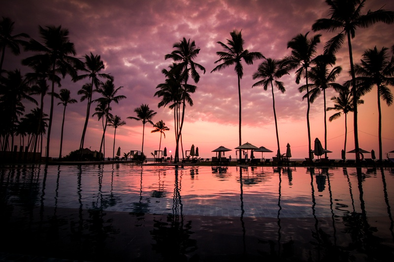 Low Angle  Coconut Trees Beside Water