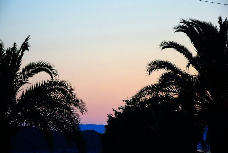 Palm Tree Silhouettes At Dusk