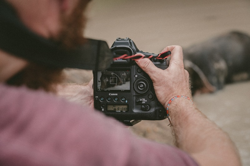 Person Holding Black Camera Taking of Animal
