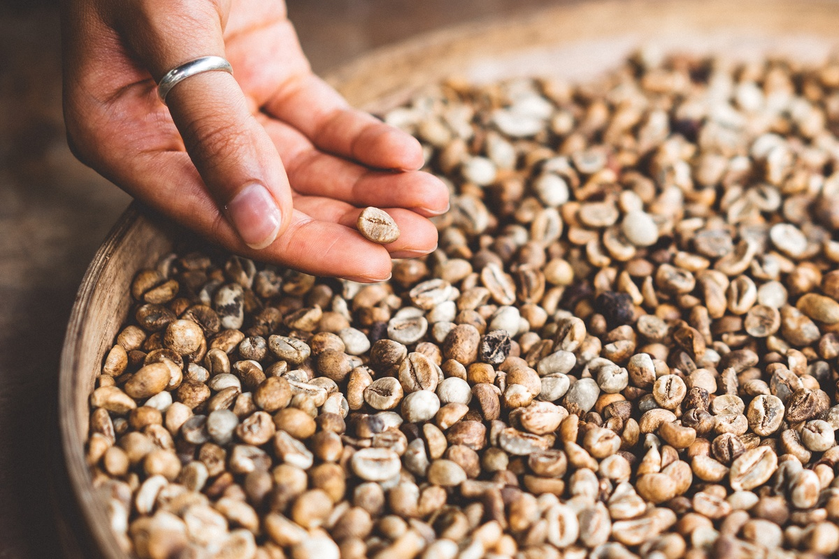 Person Holding Brown Seed
