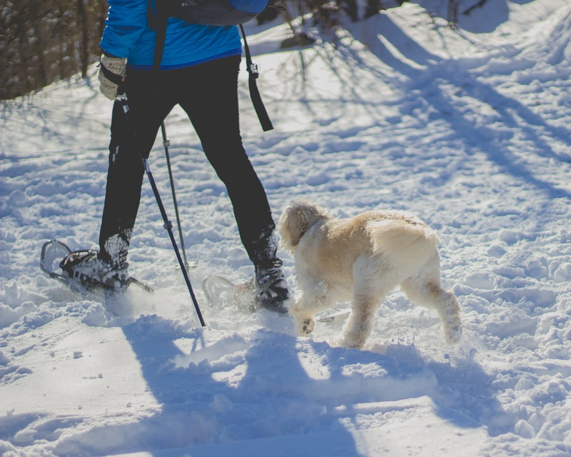 Person Walking in Front of White Dog on Snow Covered Ground