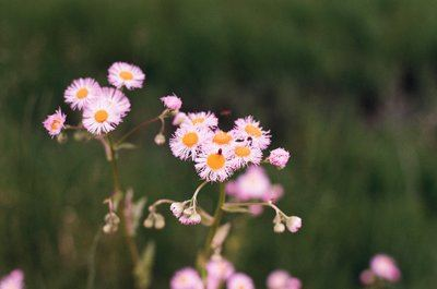 Pink Flowers With Orange Hearts In A Field