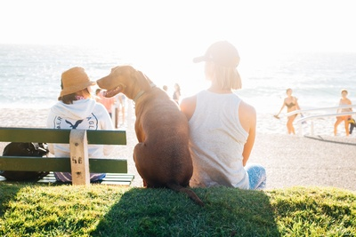 Short-Coated Brown Dog Sit Beside Person Wearing White Tank Top Near