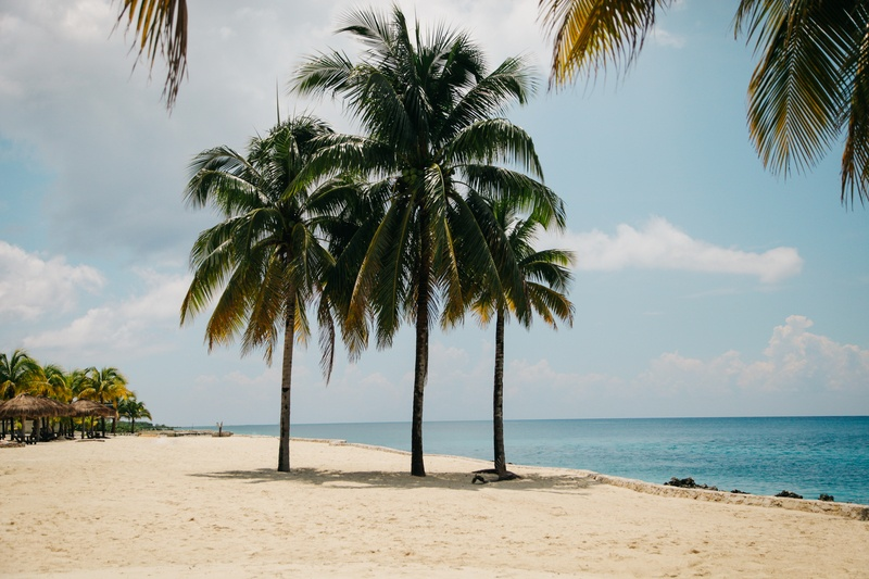 Three Coconut Trees on Brown Sand Near Water During