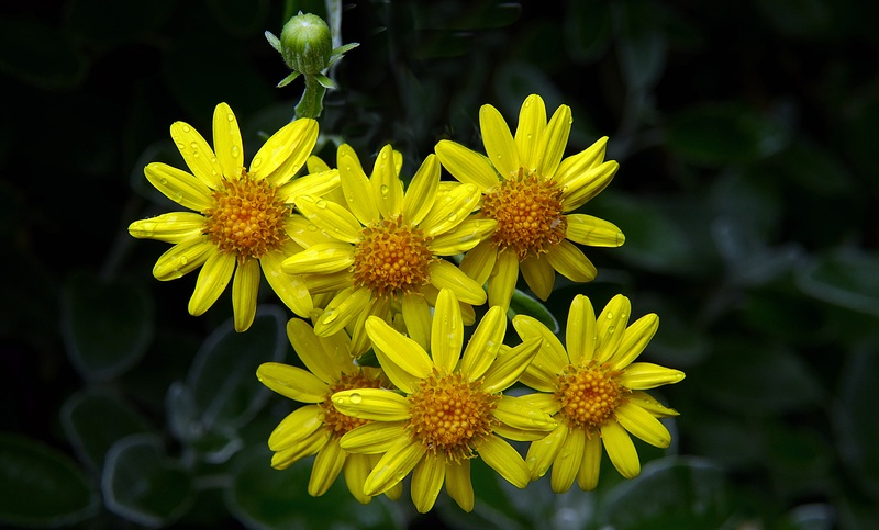 Vibrant Yellow Flowers