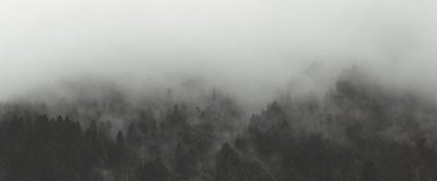 Wide Angle Forest In Thick Fog